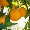 Naranja Navelina de Mesa Prod. Ecológica