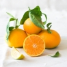Organic Farming Clemenules Mandarina