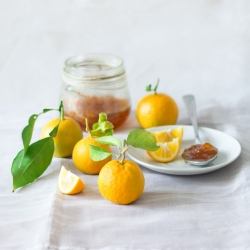 Organic Farming Bitter Oranges