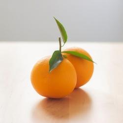 Taronja Nave Lane Late Taula Ecològica