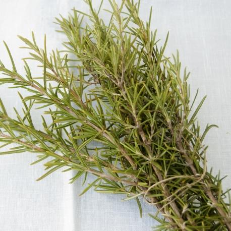Fresh wild Rosemary