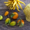 Cítrics tropicals i gourmet